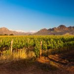 Stellenbosch Winelands Tour Bicycles