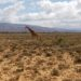 Inverdoorn Game Reserve - A Safari Day Trip Outside Cape Town